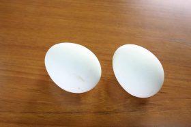 ao_egg03