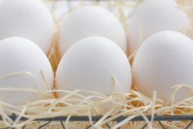 blue_egg_img