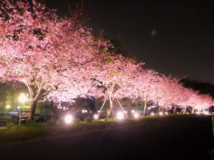 おやま思川桜ライトアップ