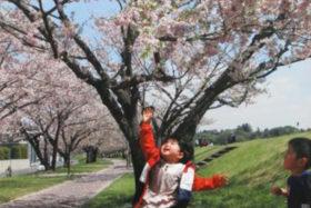 第9回思川桜フォトコンテスト最優秀賞作品のイメージ画像